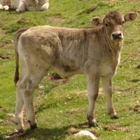 (Z) ANIMAL DE 8 A 12 MESES