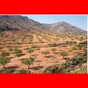 Show Dry crop Image