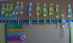 3B esqueleto