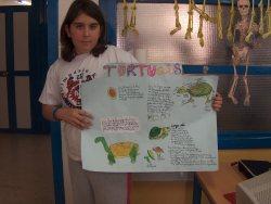 5C mural tortugas