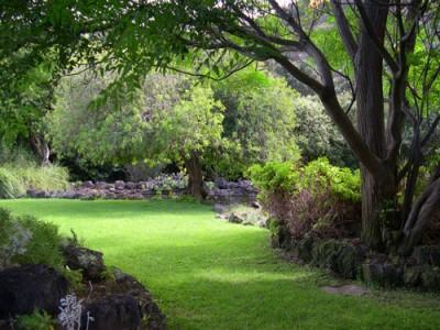 Mequed anonadado al ver las dimensiones de su for Arboles con flores para jardin