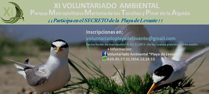 Comienza en Los Toruños el XI Voluntariado Ambiental de la playa de Levante