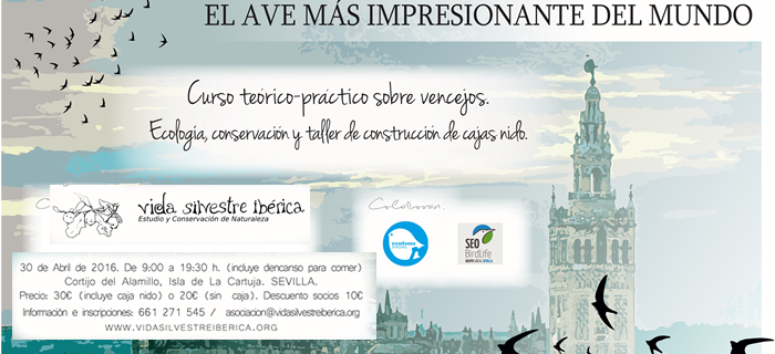 La asociación Vida Silvestre Ibérica impartirá el sábado 30 un curso sobre vencejos en la Península Ibérica