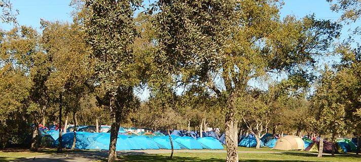 Unos 700 scouts de Sevilla participarán en la alerta 'Salvemos la tierra' con una acampada en el Parque del Alamillo