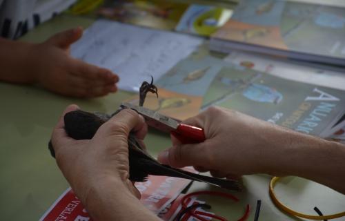 Pequeños y mayores aprenden a anillar durante el Día de las Aves en el Alamillo