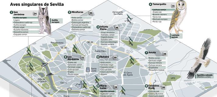 """El Alamillo es el parque de Sevilla que más ejemplares de aves concentra.<p>La Universidad de Sevilla contabiliza en el libro """"Calles aladas"""" hasta 77 especies distintas en el Parque"""