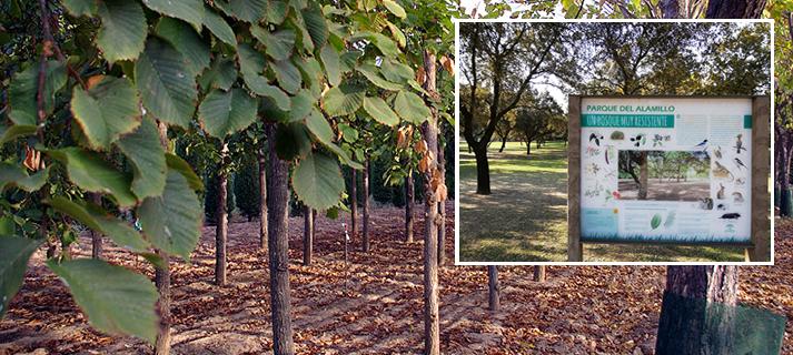 El Parque del Alamillo incorpora a su oferta de actividades una ruta botánica guiada