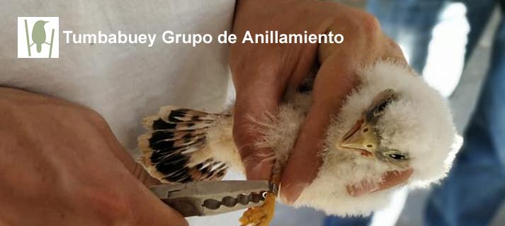 Talleres de anillamiento científico de aves