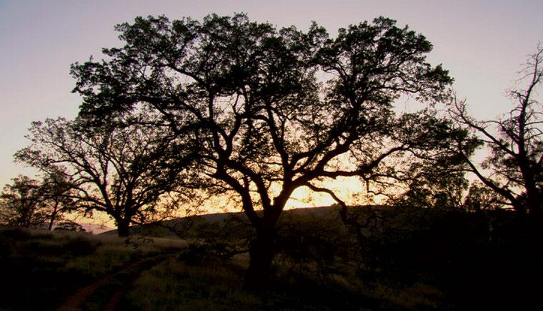 BILL VIOLA. The darker side of down, 2005. Ed. Nº 1/3. 325,75 x 579,12 cm. Video-instalación (proyección de un vídeo en color en las paredes de una sala oscura)