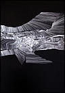 Ruth Morán. Piscografías. Papel, temple vinilico y rotulador  de tinta. 200 x 152 cm