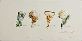 ANNA BELLA GEIGER. Am. Latina - Amuleto, A mulata, A muleta, 1977. Dibujo 48 x 70 cm. Colección de la artista