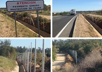 La Junta diseña nuevas medidas para evitar los atropellos de lince ibérico en la carretera Chucena-Hinojos-Villamanrique