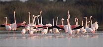 El proyecto andaluz Indalo estudiará las consecuencias y el alcance del cambio global en los ecosist...</p>