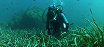 La Junta realiza la siembra de183 plantas de posidonia oceánica en zonas del Mediterráneo para facil...</p>