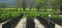 La red de viveros de Medio Ambiente alcanza un producción de 15 millones de plantas autóctonas en lo...</p>