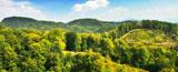 Bosque poblado de diferentes tipos de árboles, principales captadores de CO2