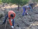 Mejora de la vegetación esteparia en la zona Mágina-Cazorla con 2,6 millones de euros.