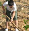 Plantación.