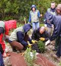 Actividades de un grupo de voluntarios.