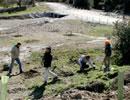 Reforestación del arroyo Calzadilla, en Almadén de la Plata.