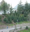 Jardín de pinsapos, en Grazalema.