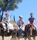 Ruta en mulo por la finca Arroyo Molino Bajo, en el Parque Natural Sierra de Cardeña y Montoro.