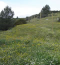 Parque Natural Sierra Mágina.