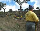 Trabajos de prevención de incendios forestales.