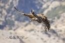 Landing. II Encuentro Fotográfico de Grandes Rapaces de la Sierra de Castril