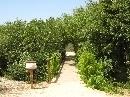 Jardín Botánico 'Dunas del Odiel': Paseo de Ribera