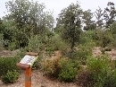 Jardín Botánico 'Dunas del Odiel': Alcornocal