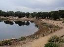 Jardín Botánico 'Dunas del Odiel': Laguna (vista parcial 2)