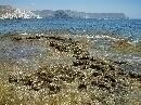 Dendropoma petraeum en la costa