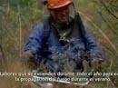 Infoca 2012: Trabajos preventivos en montes públicos