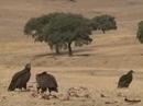 Life Biodehesa: Diversificación de hábitats. Cuidado del paisaje y la biodiversidad