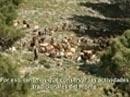 Infoca 2014-2015: Recuperación de usos tradicionales del monte