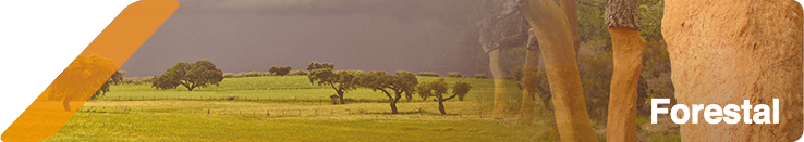 Imagen de portada de la sección de noticias forestales en Andalucía