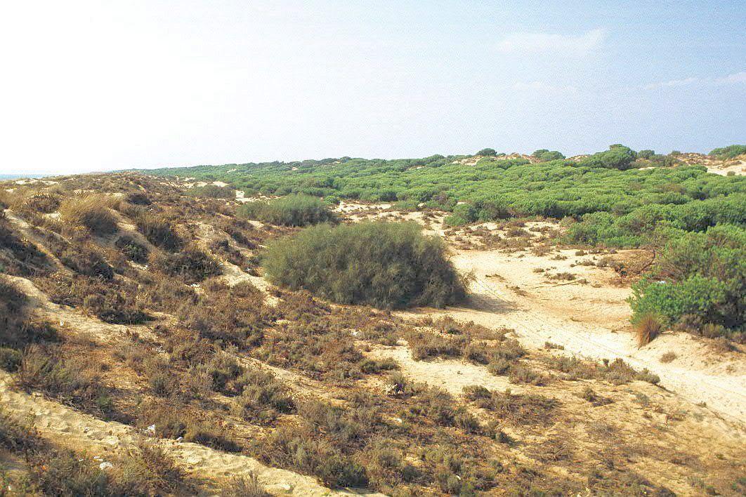 Enebrales de Punta Umbría