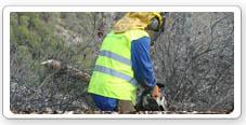 Trabajos reforestación