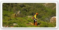 Obras forestales