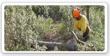 Trabajos para la prevención de incendios forestales