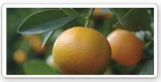 Ayudas a pymes agroalimentarias