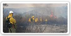 Trabajos de extinción de incendios forestales