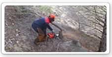 Trabajos forestales para la prevención de incendios