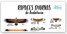 Fichas Didácticas Aves