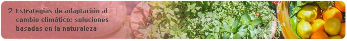2 Estrategias de adaptación al cambio climático: soluciones basadas en la naturaleza