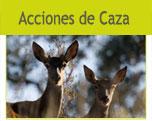 Acciones de caza: relación de monterías, ganchos y batidas semanales por provincias