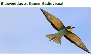 Acceso al Banco Audiovisual de la Consejería de Medio Ambiente y Ordenación del Territorio