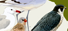 Día de las Aves en los espacios naturales (octubre de 2017)