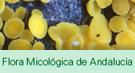 Edición digital del libro 'Flora micológica de Andalucía'